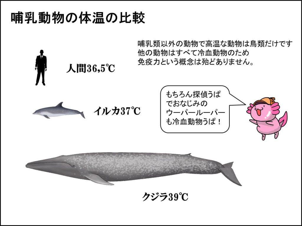 哺乳動物の体温比較